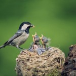 Everything you need to know about feeding birds in your garden